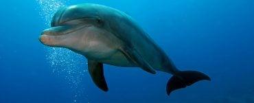 what do bottlenose dolphin eat
