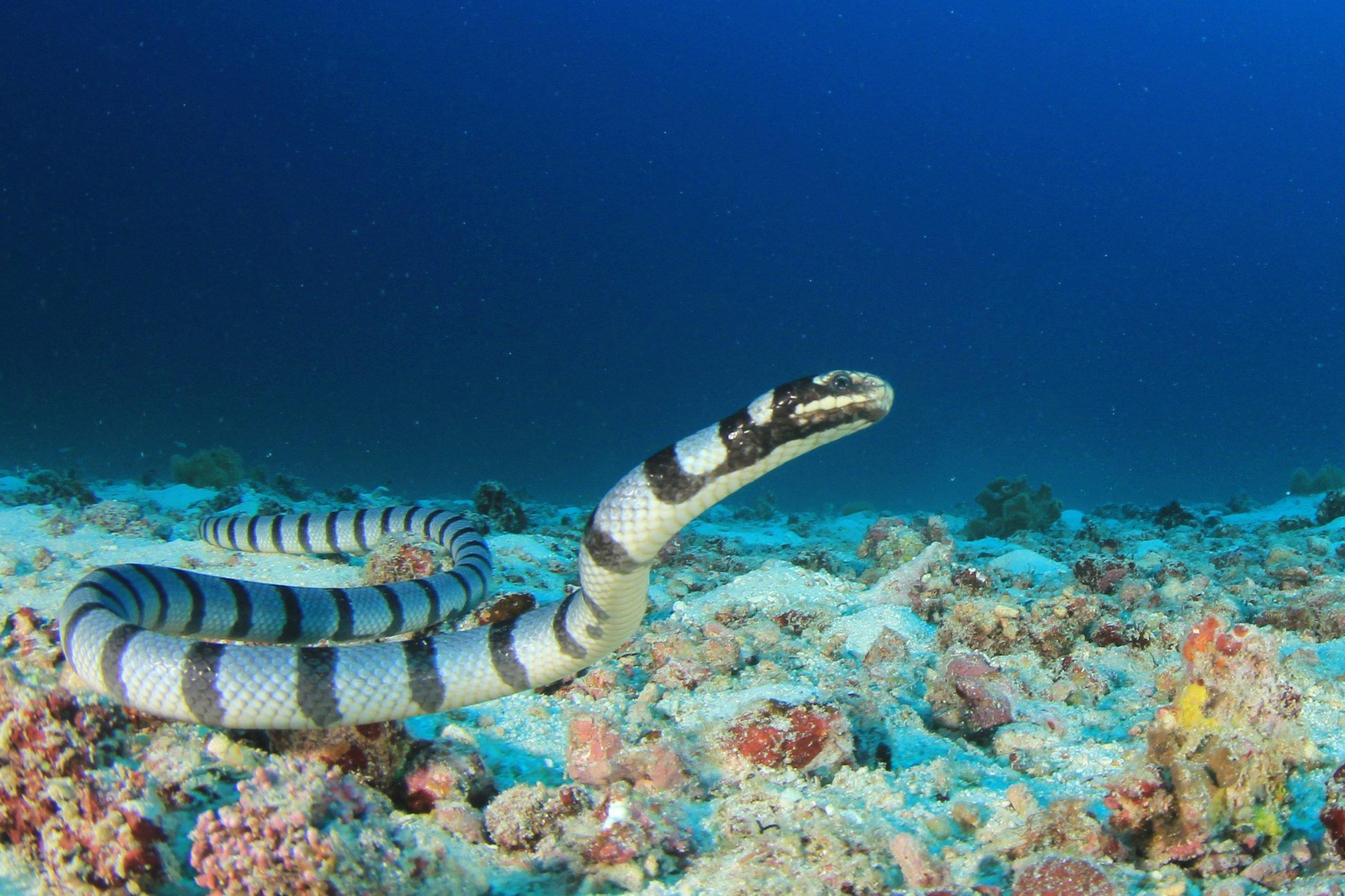 sea snakes diet