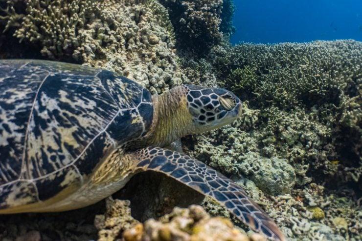 where green sea turtles sleep
