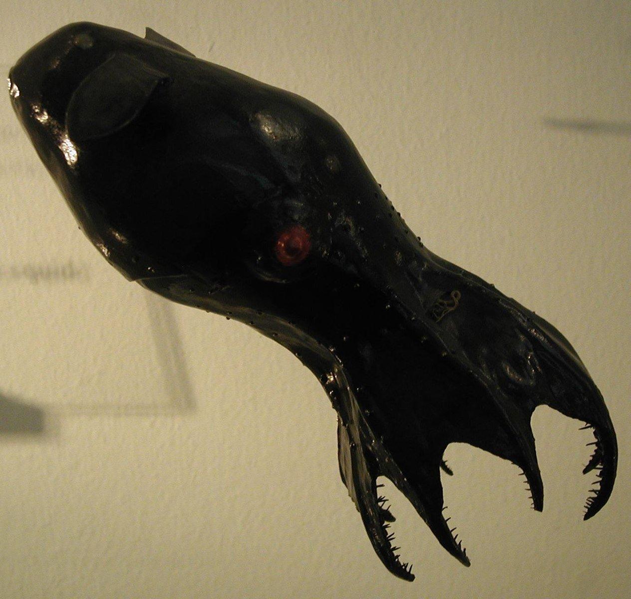vampire squid model