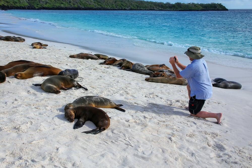 Tourist Gets Too Close to Sea Lions
