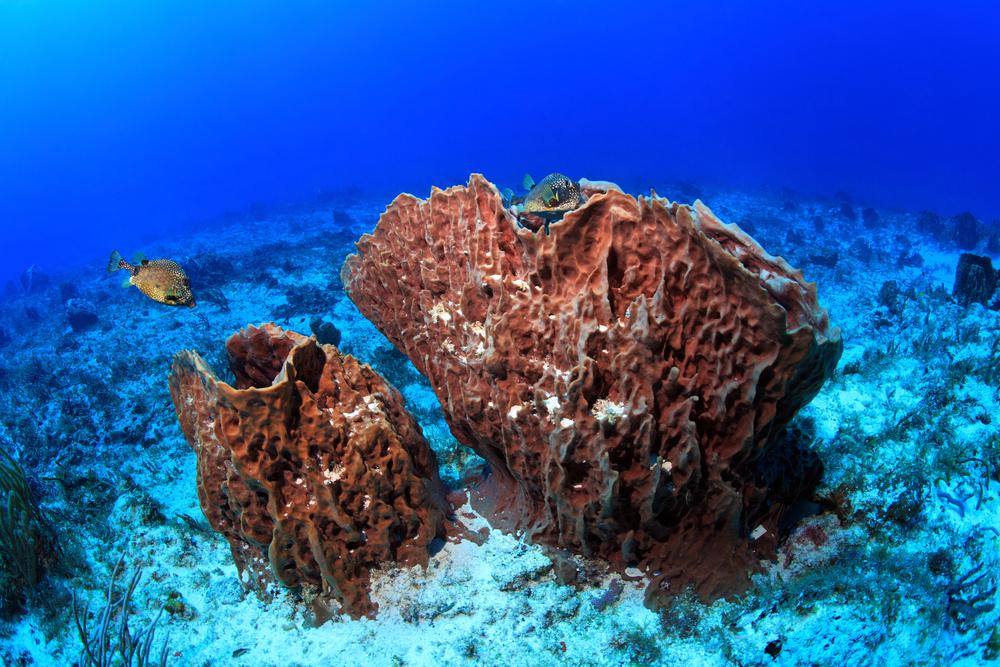 giant barrel sponge warm waters