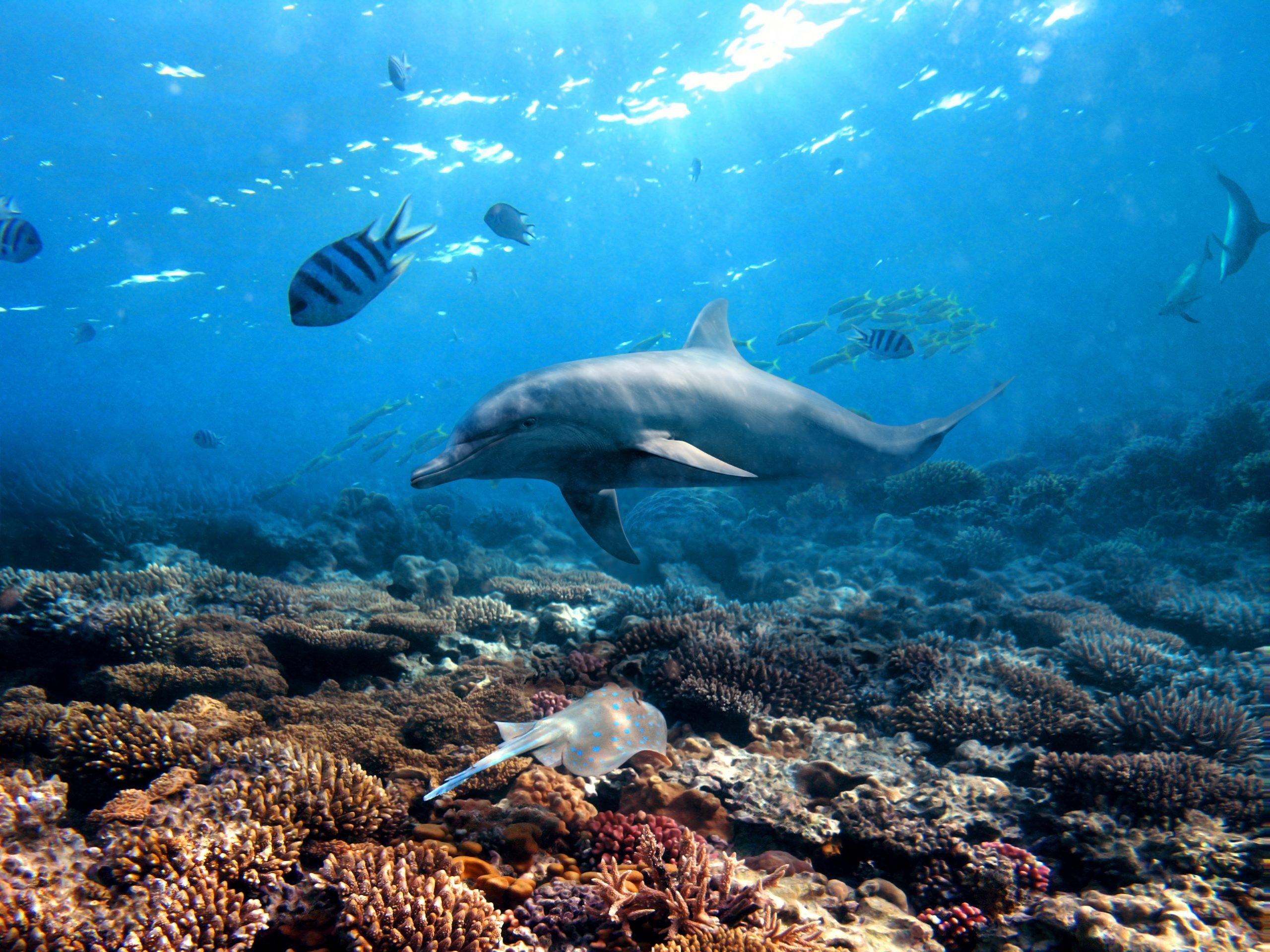 habitat of the bottlenose dolphin