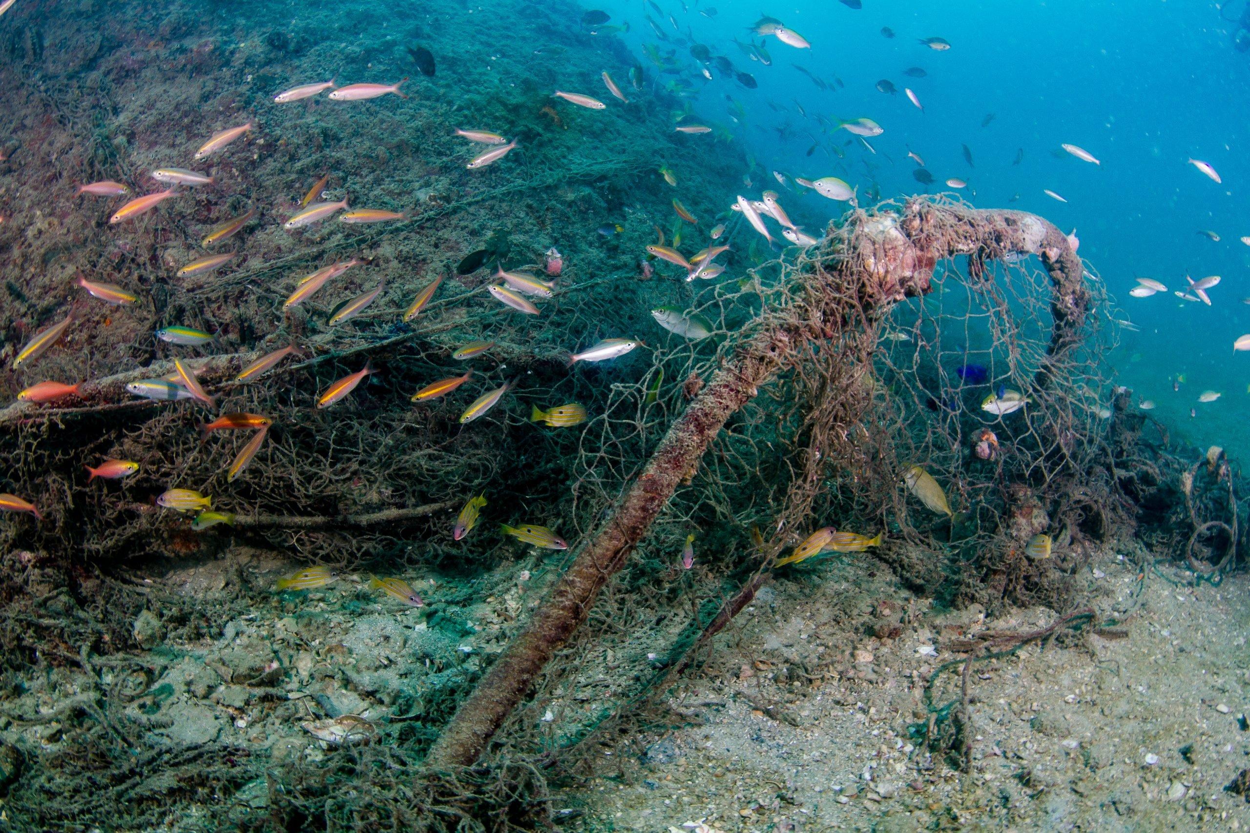 bottom trawling destroying coral reefs