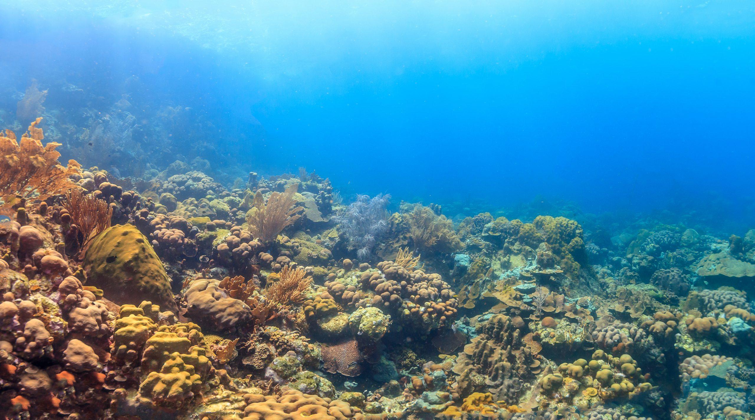 coral reef where cockscomb coral live