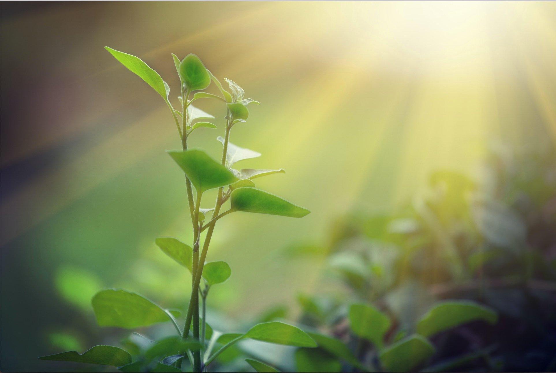 plant in sun