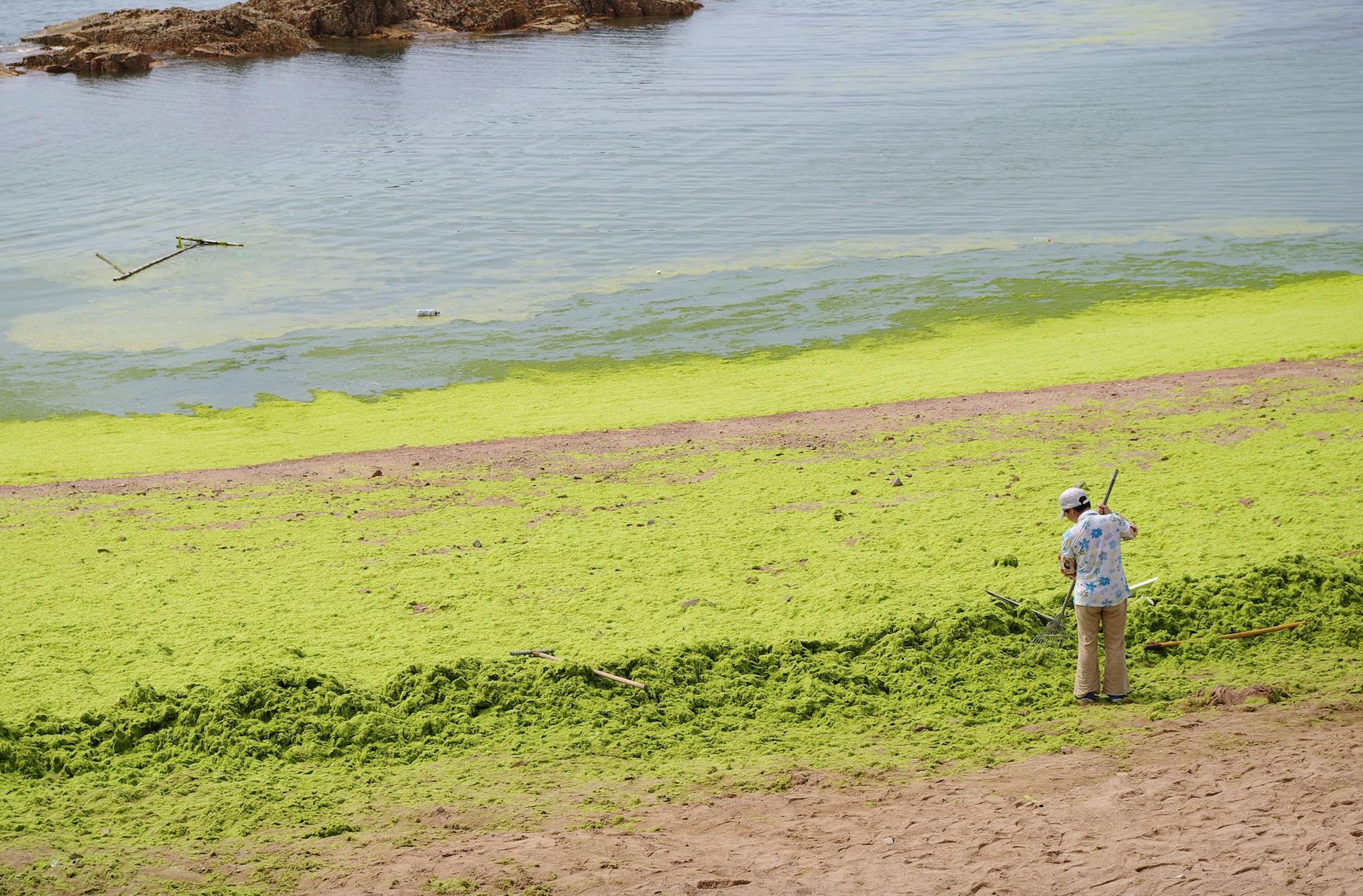 algae bloom on beach