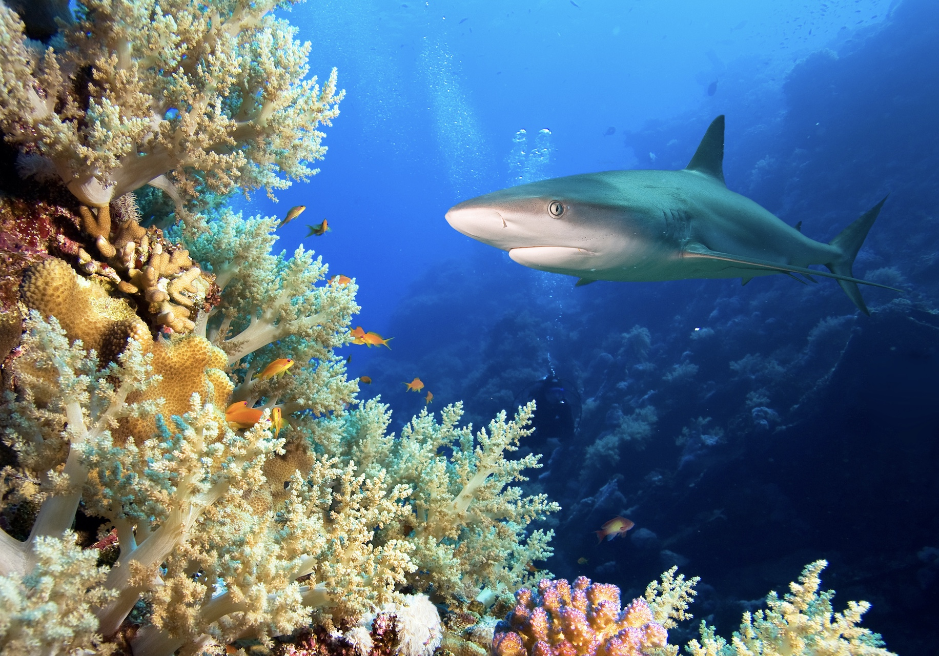 effects of climate on shark populations