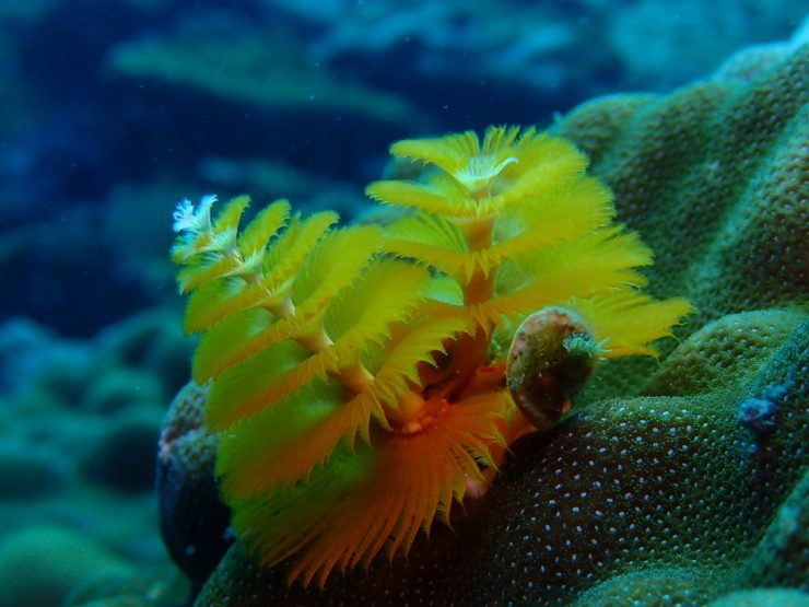 Are Christmas tree worms decomposers?