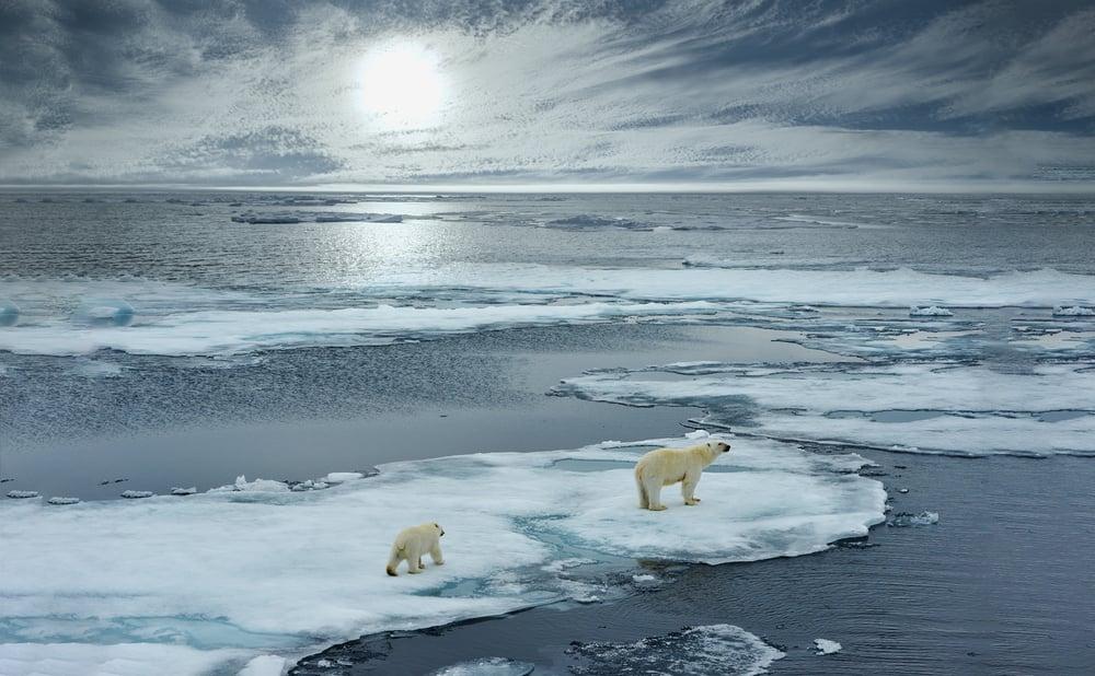 arctic ocean and polar bears
