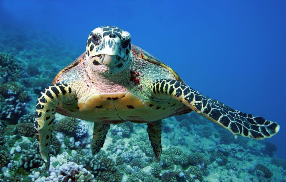 sea turtle closeup