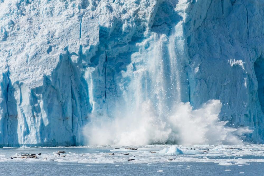 Iceberg calving near wildlife