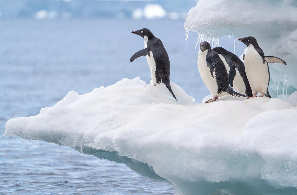 Group of penguins on an iceberg