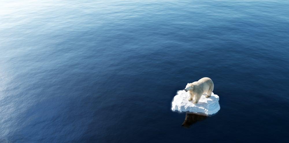 Polar bear floating on small iceberg