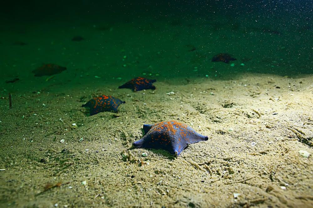 Star fish on ocean floor