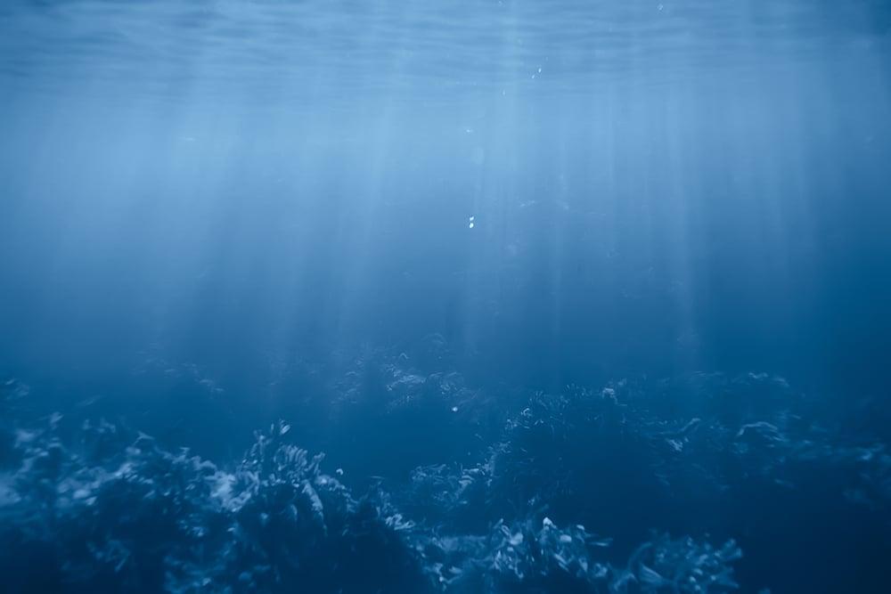 Reef with algae underwater view