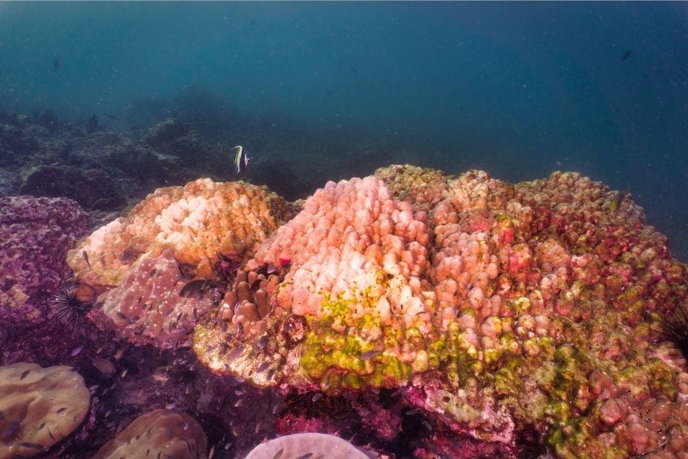 Colorful Corals on sea