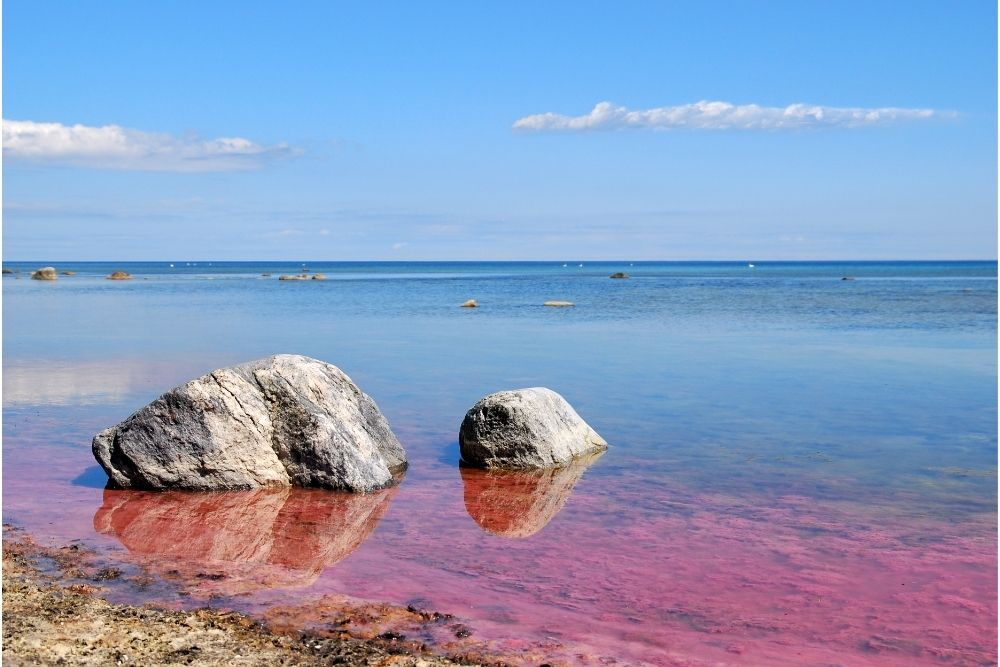 Beach with red tide on shore