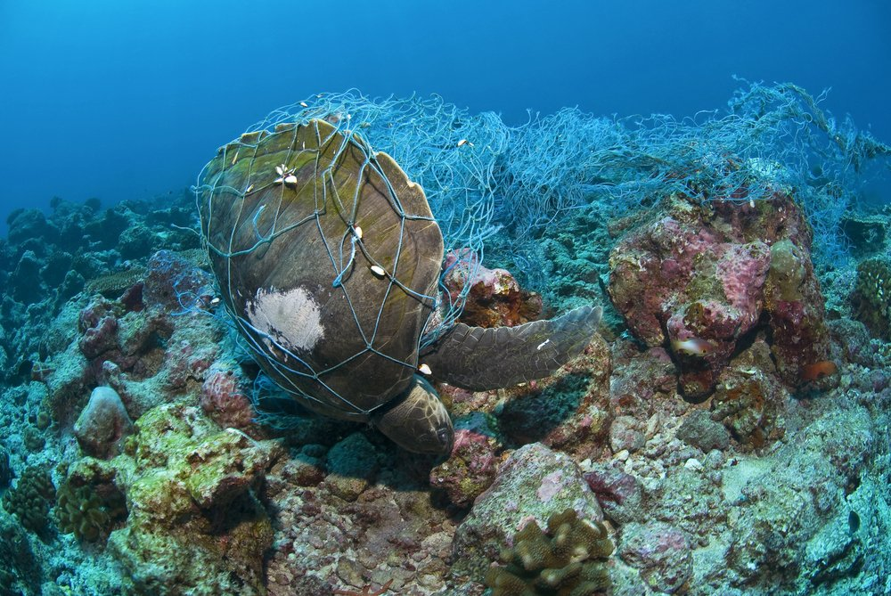 fishing net caught on a sea turtle in the ocean