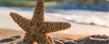 Are Starfish Fish?