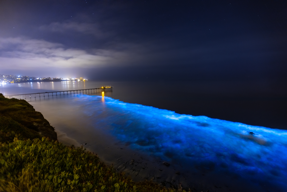 bioluminescence photographed on a beach